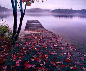 bridge, lake, and roses image