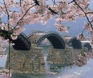 bridge, cherry blossoms, and water image