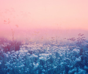 flowers, pink, and landscape image