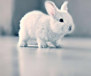 cute, rabbit, and bunny image