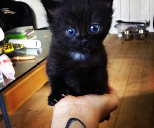 adorable, black, and fluffy image