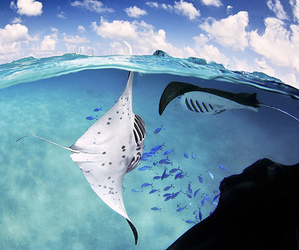 animal, ocean, and water image