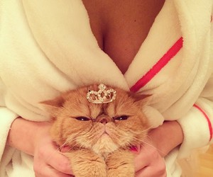 cat, luxury, and princess image
