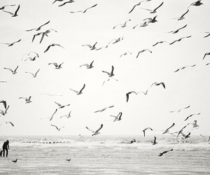 birds, black and white, and sea image