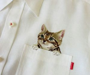 cat, shirt, and clothes image