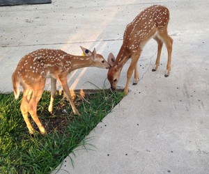 aw, indie, and baby deer image