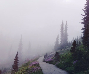 adventure, dark, and forest image