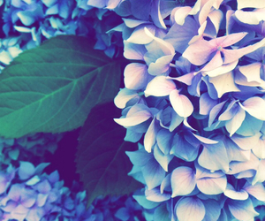 blue, flowers, and green image