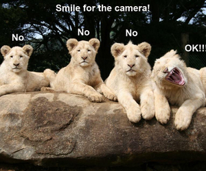 funny, lion, and smile image