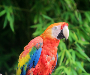 colourfull, parrot, and animal image