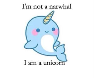 unicorn narwhal image