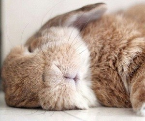 bunny, photo, and cute image