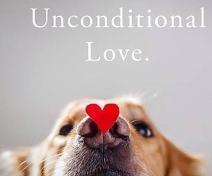 dog, dog quote, and a place to love dogs image