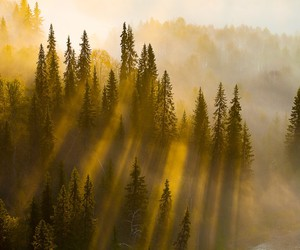 finland, forest, and light image