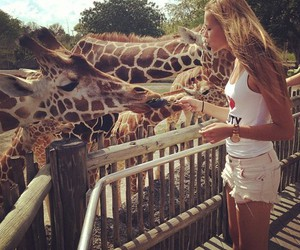 girl, giraffe, and animal image