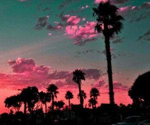 green sky, palm trees, and pink sky image