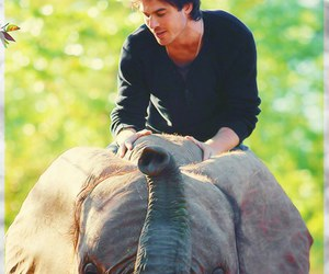 ian somerhalder, elephant, and animal image