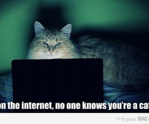 cat, internet, and funny image