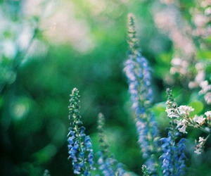 blue, flowers, and glitter image