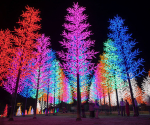 tree, light, and neon image