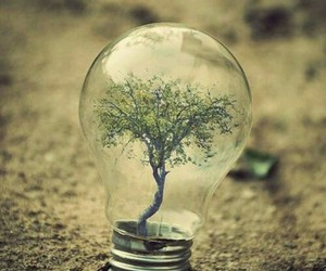 tree, nature, and light image