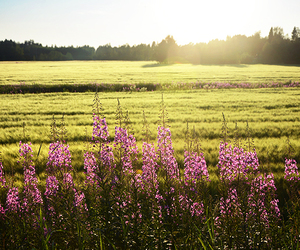 country and flowers image