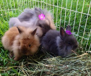 bunnies, lovely, and sweeties image