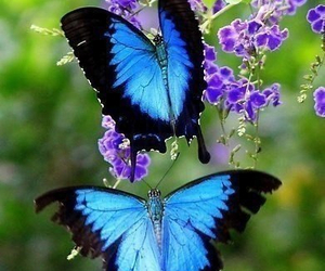 blue, butterflies, and flowers image