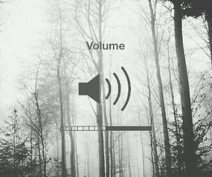 volume, black and white, and forest image