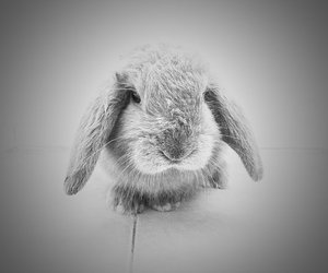 animal, black and white, and hairy image