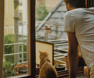 cat, boy, and window image