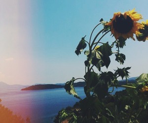 hipster, sunflower, and flowers image