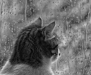 alone, looking, and cat image