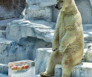 Polar Bear, funny, and bear image