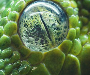 eye, green, and snake image