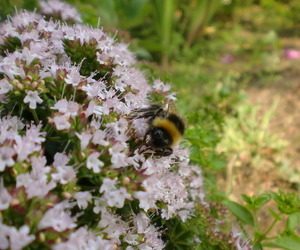 bee, flower, and nature image