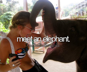 animal, elephant, and meet image