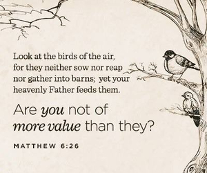 birds, value, and matthew 6:26 image
