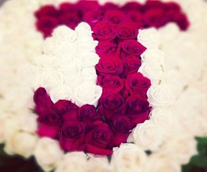 j, roses, and white image
