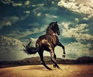 animali, animals, and cavallo image