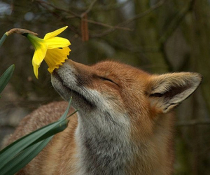 flower, fox, and cute image
