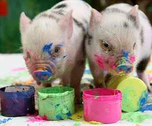 pig and paint image