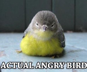 bird, angry bird, and cute image
