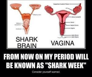 funny, period, and shark week image
