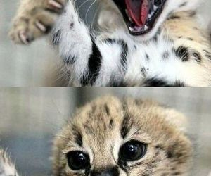 adorable, fierce, and wild image
