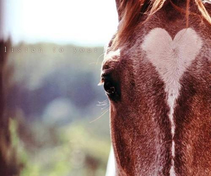 horse and heart image