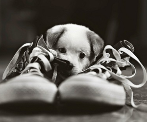 baby, black and white, and converse image