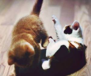 cats, fight, and sweet image