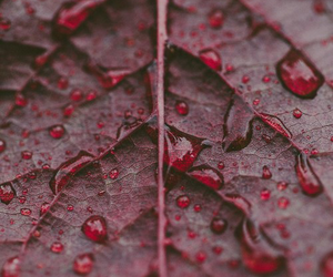 red, leaves, and nature image