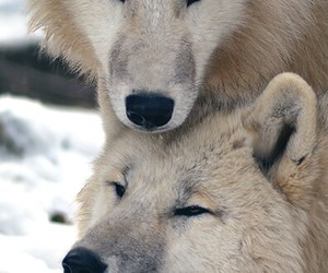 casal, cuty, and Fofos image